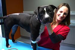 Charte engagement vétérinaire