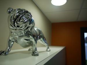 Animage Brest-Guipavas Scanner veterinaire et chirurgie